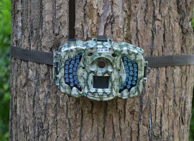 Так выглядит фотоловушка, установленная на дереве в лесной зоне.