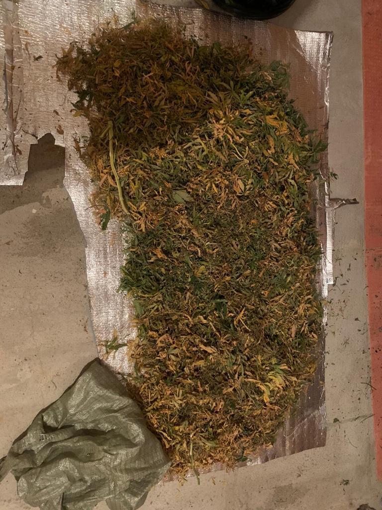 Конопля в санкт петербурге скайрим мод конопля